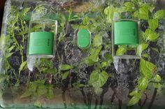 mr greens welt tomatenaussaat 2016 exotische pflanzen tropische und heimische planzen aus. Black Bedroom Furniture Sets. Home Design Ideas