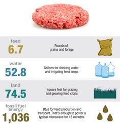 Burger resources ... meat is a very expensive food to grow .... it has much more of an impact on the environment than plants