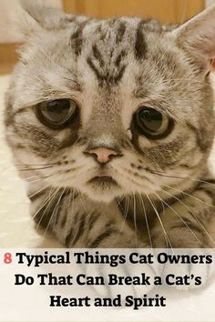 20 Cat Lovers Ideas In 2020 Cat Lovers Cats Crazy Cats