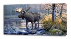 4 Sizes - Moose Canvas Print Wall Decor Art Giclee Nature Scenery Animals Forest