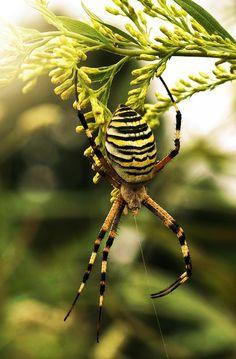Early Morning Spider - The Hypertufa Gardener