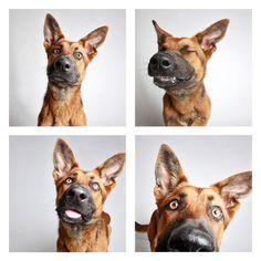 Fotoprojekt für herrenlose Hunde: Fiffi in der Fotobox - Fotografie   STERN.DE Mobile