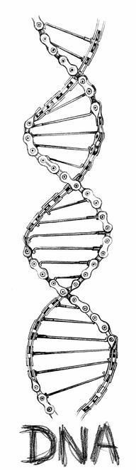 Pencil on paper drawing. When cycling is part of your DNA. Cycling Tattoo, Bicycle Tattoo, Bike Tattoos, Motorcycle Tattoos, Bicycle Art, Cycling Art, Motorcycle Helmet, Motocross Tattoo, Motorcycle Quotes