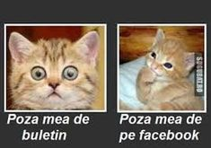 Funny Animal Pictures, cat memes, Just like cat, funniest animals Funny Shit, Funny Cute, The Funny, Funny Stuff, Fb Profile Photo, Facebook Profile, Facebook Pic, Profile Pictures, Tierischer Humor