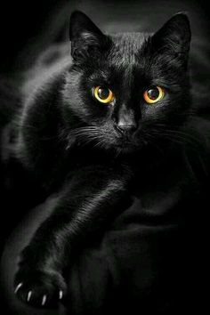 Love black cats, they are good luck in some cultures.
