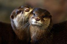 Best friends Source: http://blog.livedoor.jp/kotsume_fn2/archives/52069447.html