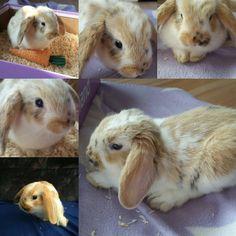 Bunny Pets Babyanimal Rabbit