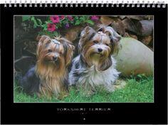 Yorkie Kalender 2015 Yorkshire Terrier, Yorkie, Dogs, Animals, Fashion, 2015 Calendar, Homemade, Yorkshire Terriers, Moda