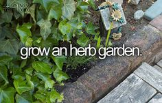 Grow An Herb Garden -STARTED THIS YEAR : )
