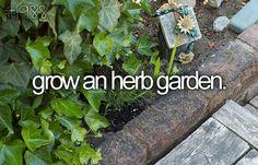 grow an herb garden