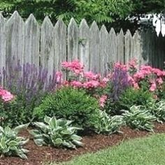 Formal flower bed with salvia, pink roses, boxwood, and hostas in front of picket fence. Follow @gardenapproved by kay #flowerbedgardening #FlowerGarden
