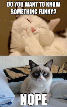 Grumpy Cat Grumpy cat best one yet. I love grumpy cat. dog faces That's my Grumpy Cat Grumpy Cat Quotes, Funny Grumpy Cat Memes, Cat Jokes, Funny Animal Memes, Funny Animal Pictures, Funny Cats, Funny Animals, Cute Animals, Funny Memes