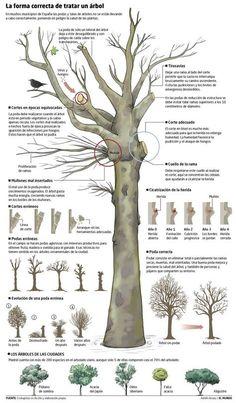 Explicamos cómo podar los árboles de forma adecuada para que se mantengan fuertes, saludables y productivos. Consejos fáciles.