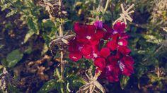 #flower #pink #autumn Autumn, Flowers, Plants, Red, Pink, Garden, Fall, Garten, Fall Season