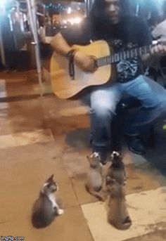 GIFsBOOM is your source for the best GIFs online. Find everything from funny GIFs, unique GIFs and more. Animals And Pets, Funny Animals, Cute Animals, Crazy Cat Lady, Crazy Cats, Cool Cats, Gatos Cool, Best Cat Gifs, All About Cats