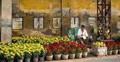 Vietnam Tet Holiday Preparation #SaffronTravel #MICE #Vietnam #Travelmediate