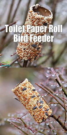 Your local wild birds will surely thank you for taking the time to make a Toilet Paper Roll Bird Feeder. It's a simple craft that is easy and fun for kids of all ages, especially preschoolers. Recipes for kids to make Toilet Paper Roll Bird Feeder Best Bird Feeders, Bird Feeder Craft, Homemade Bird Feeders, Pinecone Bird Feeders, Homemade Bird Toys, Suet Bird Feeder, Make A Bird Feeder, Bird Seed Feeders, Homemade Bird Houses
