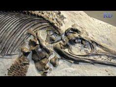 Richard Dawkins - The Sea Turtle's Tale - YouTube