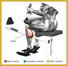 SEATED CALF RAISE MACHINE - The seated calf raise machine is an isolation exercise and it focuses on the whole muscle of the calf, both the internal medial head and the external lateral one. Muscle Fitness, Fitness Tips, Fitness Outfits, Fitness Exercises, Gym Fitness, Home Gym Machine, 12 Week Challenge, Calf Raises, Easy Workouts