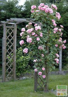 The maintenance of roses in winter Potager Garden, Terrace Garden, Garden Planters, Home Grown Vegetables, Winter Vegetables, Garden Online, Rose Bush, Back Gardens, Winter Garden