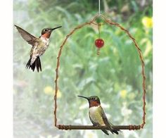 Hummingbirds are territorial and will use the Copper Hummingbird Swing as a perch to watch over their food source.