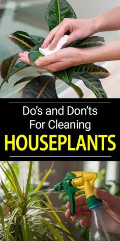 Cleaning plant leaves and grooming houseplants can be time-consuming but proper plant care keeps plants healthy and enhances their appearance.