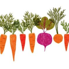 'Some carrots and a beetroot' by Katie Wilson Carrot Drawing, Botanical Illustration, Illustration Art, Give Peas A Chance, Illustrations Vintage, Watercolor Fruit, Spring Projects, Kids Prints, Beetroot