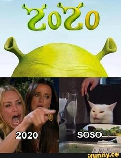 Cat Memes, Funny Memes, Hilarious, Happy Pharrell, Dbz, Doctor Who, My Little Pony, Acre, Avengers