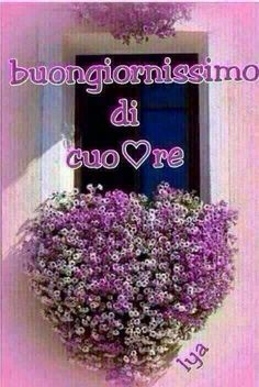 Italian Memes, Italian Quotes, Good Morning Good Night, Good Day, Love Thoughts, Happy Day, Wedding Bouquets, Lilac, Lavender