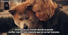 Las mascotas suelen ser nuestros mejores amigos que las personas