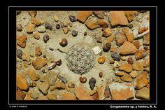Cactácea rodeada de minifósiles