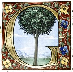 Letter G . Douce Pliny Florentine Venice 1476 27 The - - jpeg Alphabet Art, Calligraphy Alphabet, Letter Art, Medieval Manuscript, Medieval Art, Renaissance Art, Illuminated Letters, Illuminated Manuscript, Eslava