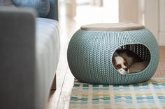 The Cozy Pet Bed and Cozy Pet Home are part of the KNIT Collection by Curver featuring soft cushions and plastic in trendy color palettes. Heated Cat Bed, Dog Milk, Dog Furniture, Furniture Stores, Cheap Furniture, Furniture Makeover, Pet Home, Cat Design, Design Ideas