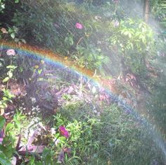 Manetsgarden: mom took these at Monets garden in Giverny -You can find Monet and more on our website.Manetsgarden: mom took these at Monets garden in Giverny - Spring Aesthetic, Nature Aesthetic, The Ancient Magus Bride, Plein Air, Looks Cool, Ethereal, Mother Nature, Fairy Tales, Scenery