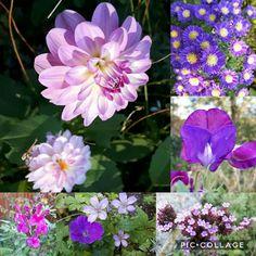 Mooie kleuren in de tuin