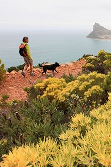 Most Cape reserves are owned by CapeNature so dogs are verboten. But with a bit of scratching around you can find some spectacular pet-friendly hikes...