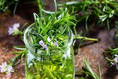 142102789_441292820245259_4278152232000042194_n Aromatic Herbs, Healing Herbs, How To Darken Hair, Nature Secret, Mosquito Repelling Plants, Clean Beauty, Herbal Remedies, Herbalism, Tone It Up
