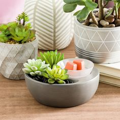 Little Garden Scentsy Warmer - Be on the hip side with our Little Garden Scentsy Warmer. When it comes to home decor trends, show your in the know. This element warmer comes with the warmer, three faux succulents and one bag of black stones. Scentsy Uk, Colored Light Bulbs, Scented Wax Warmer, Candle Warmer, Wax Warmers, Faux Succulents, Home Decor Trends, Scented Candles, Interior Decorating