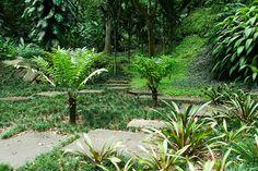 Sitio Roberto Burle Marx. Landscape Architecture by Roberto Burle Marx. Photo by Malcolm Raggett.