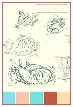 sleeping cat sketch and drawing Les Moutons de Kallou 's work