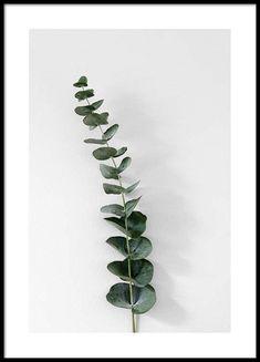 Eucalyptus branch one Poster in de groep Posters / Afmetingen / 21x30cm bij Desenio AB (3392)