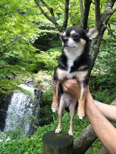 Kota and waterfalls
