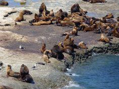 Punta Delgada, Peninsula Valdes, Argentina