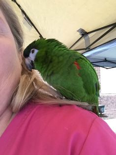 Silly Mini Macaw! Such a character!