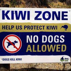 kiwi zone no dogs allowed
