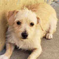 Los Angeles County Downey In Downey California Pet Adoption Pets Dog Adoption