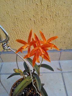 cultivando Orquídeas e idéias: VASOS PARA ORQUIDEA. COMO ESCOLHER CERTO!!!