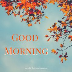 15 Good Morning Images for Free Download | Birthday Wishes Expert