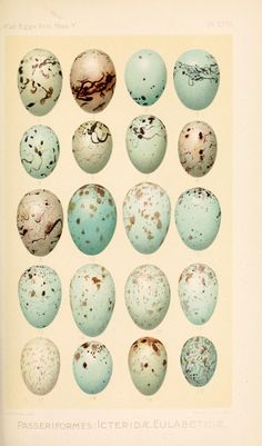 Heaveninawildflower — Birds' Eggs taken from 'Catalogue of the...