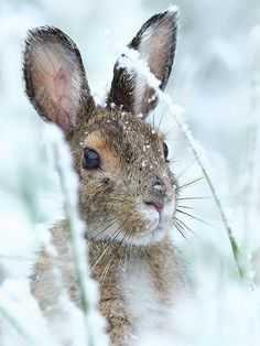 hare i sne, vinter, bunny rabbit snow winter animals photos Nature Animals, Animals And Pets, Baby Animals, Cute Animals, Animals In Winter, Animals In Snow, Wild Animals, Beautiful Creatures, Animals Beautiful